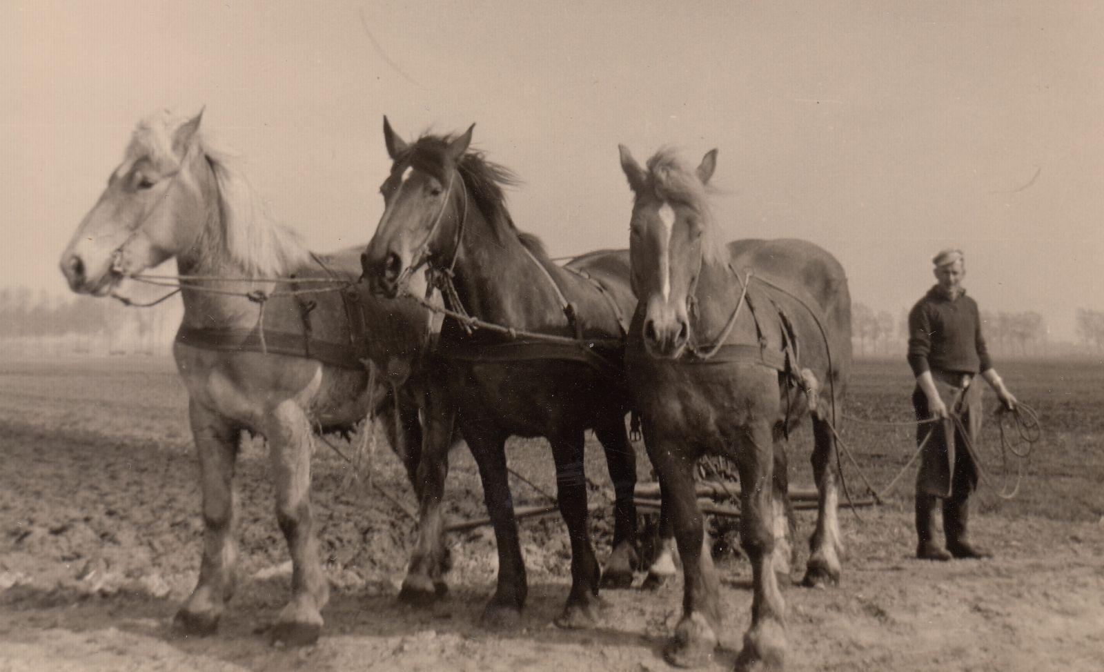 'Het boeren van toen: het is voorbij'